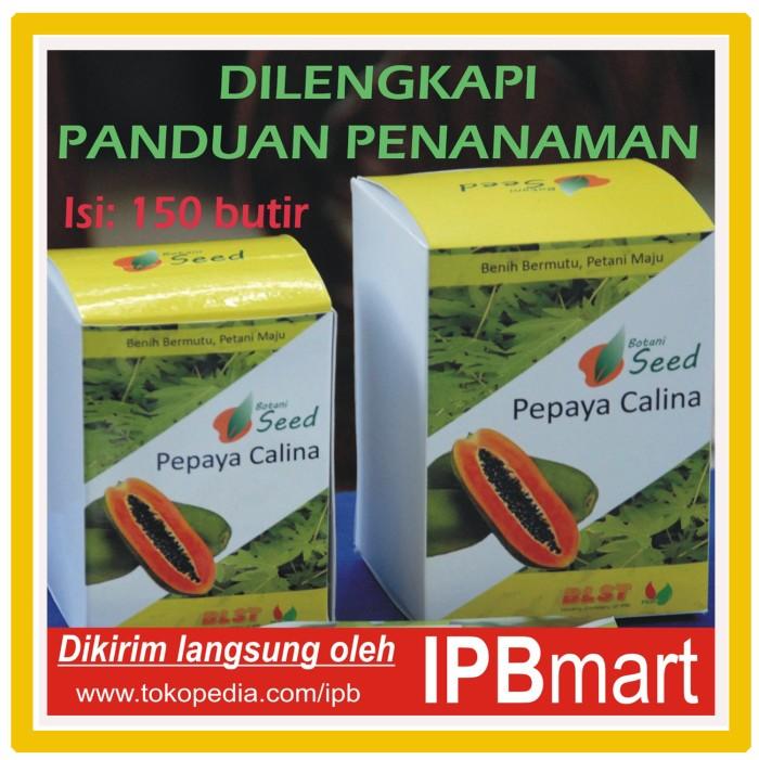 Jual Isi 150 biji -- Inovasi IPB: Benih Pepaya Calina ...