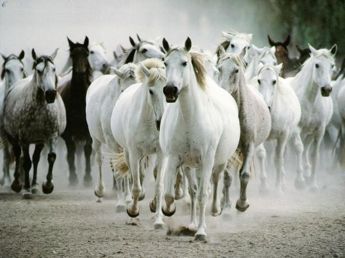 harga Repro gambar lukisan horse kuda feng shui pretty painting beautiful Tokopedia.com