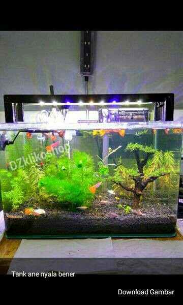 Jual Lampu Aquascape Aquarium Tank 45cm 50cm Kota Tangerang Selatan Dzklikoshop Tokopedia