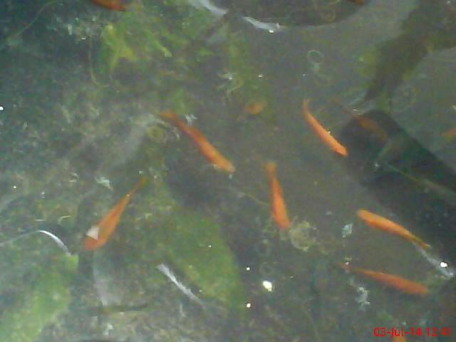 Jual Jual Ikan Kecil Kab Bantul Vra91 Collection Tokopedia