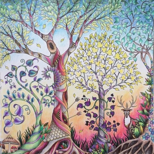 ENCHANTED FOREST COLORING BOOK JOHANNA BASFORD
