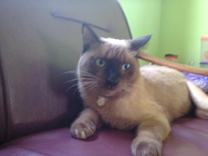 Katalog Kucing Himalaya DaftarHarga.Pw