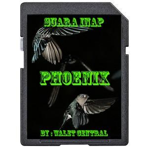 Foto Produk Suara Walet Inap Phoenix dari Walet Central