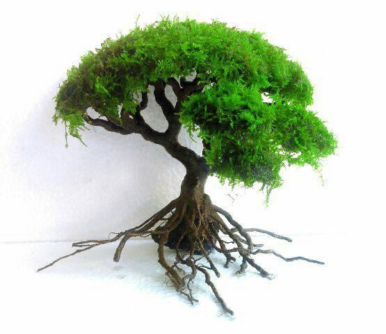 Aquascape Tree: Jual Moss Tree For Aquascape