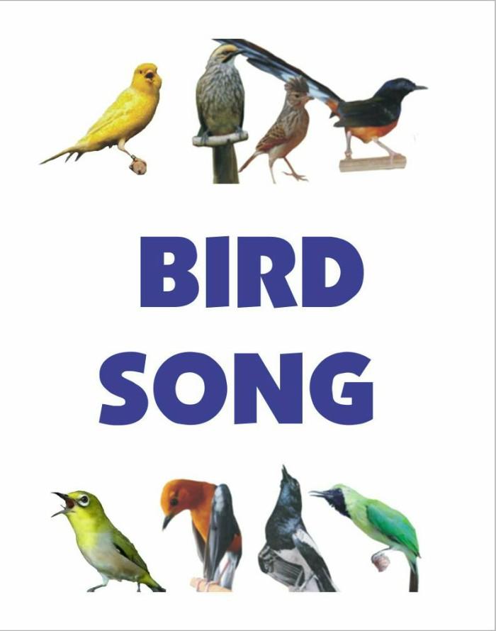harga Bird song (speaker mp3 masteran isian burung kicau) Tokopedia.com