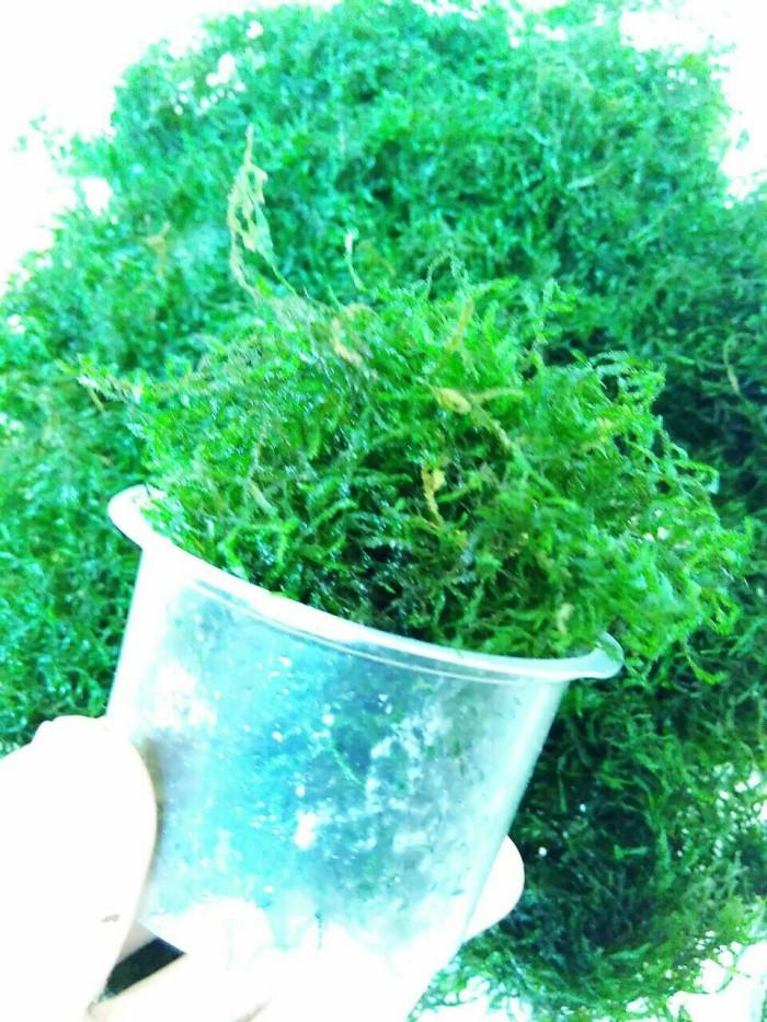 harga Moss peackok cup ice cream Tokopedia.com