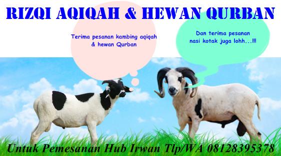 Jual Kambing Aqiqah Hewan Qurban Kambing Sapi Jakarta Utara Rizqi Aqiqah Qurban Tokopedia