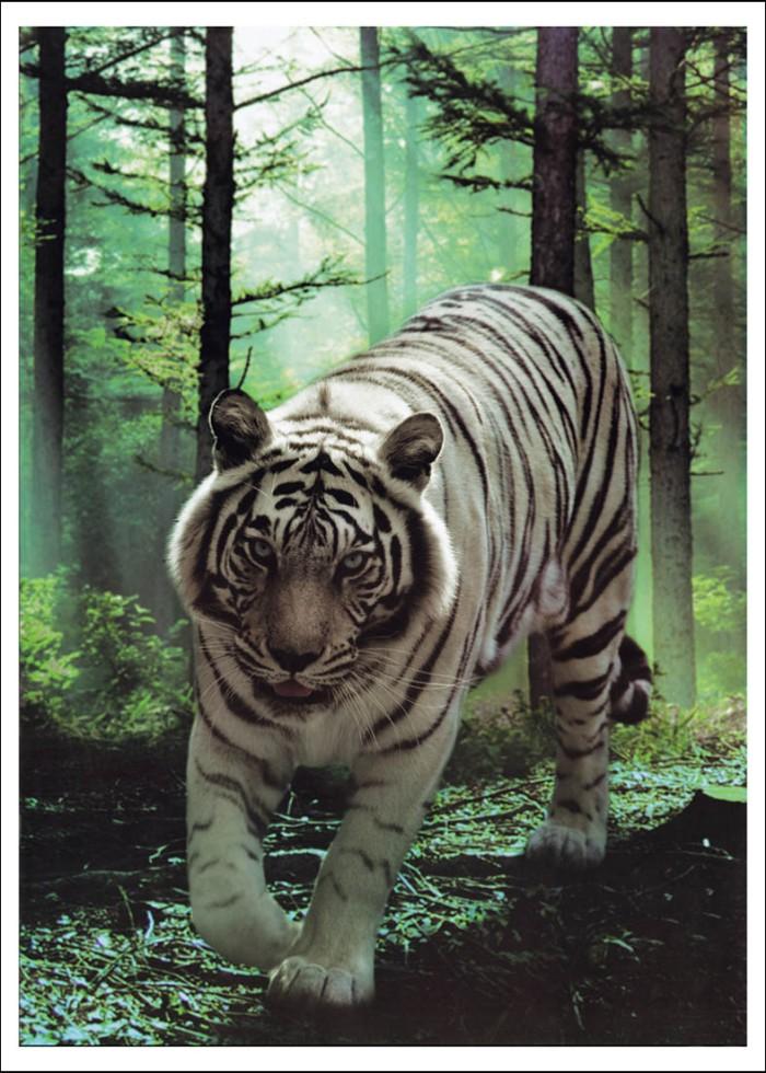 Download 53 Koleksi Gambar Foto Harimau Putih Terbaik Gratis