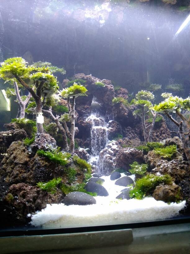 Delightful ... Terima Jasa Setting Aquascape