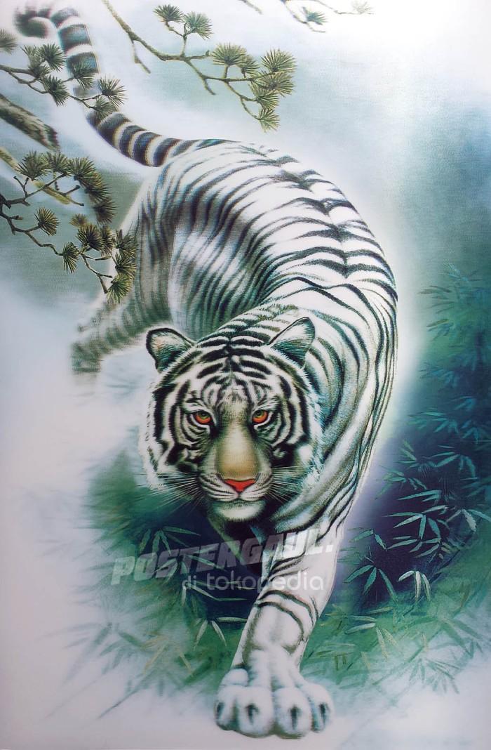 Unduh 970 Koleksi Gambar Harimau Macan Putih Terbaik Gratis