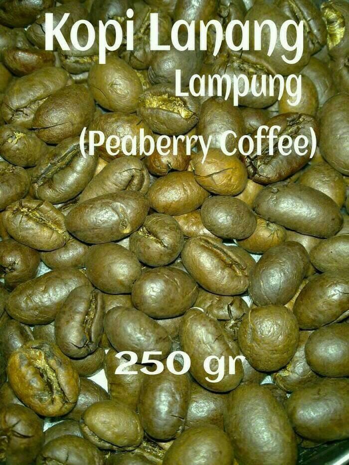 Kopi lanang /jantan /peaberry lampung 250 gr robusta