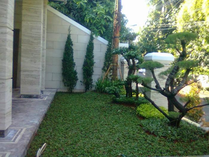 Jual Desain Taman Minimalis Aneka Rumput Supplier Tanaman Hias