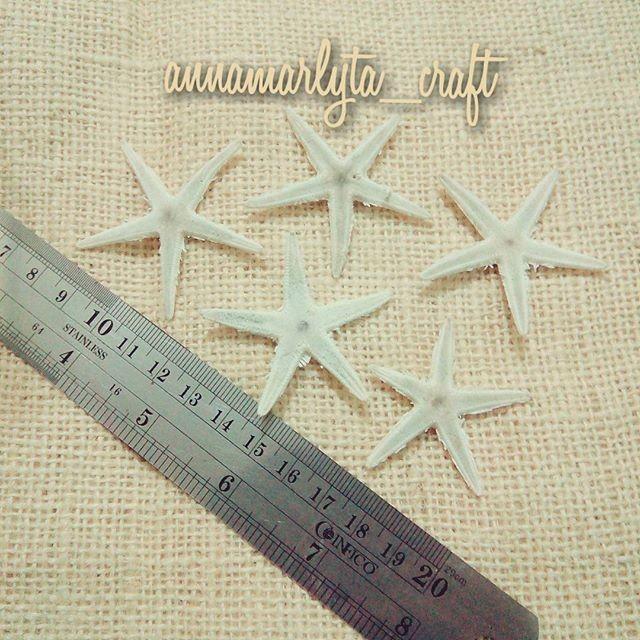 starfish kecil
