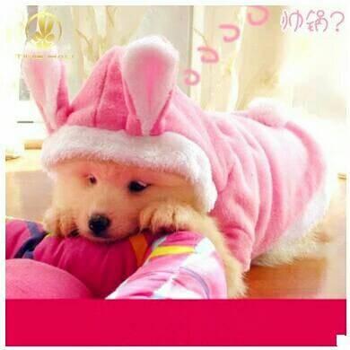 harga Baju hodie bunny lucu kucing kelinci anjing jaket hoodie Tokopedia.com