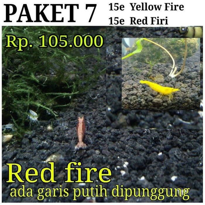 harga Yellow fire * red fire * aquascape * udang hias Tokopedia.com