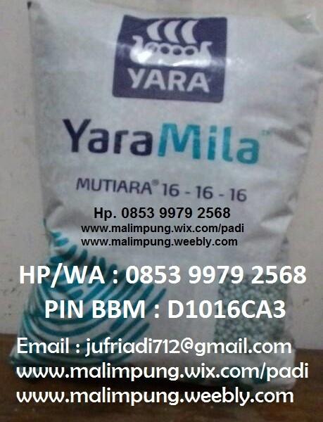 Jual Pupuk Npk Yaramila Mutiara 16 Makassar Kota Makassar Toko Pupuk Online Tokopedia