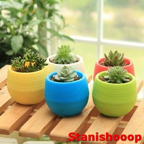 Jual Mini Pot Bunga Hias Kaktus Tanaman - Multi-Color - HMCSHOOOP ... 4c28bc6952