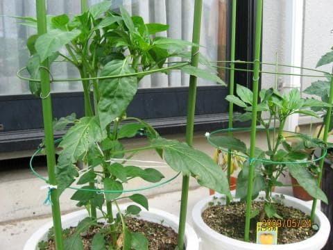 Jual Penyangga Tanaman Pohon Bunga Buah Rambat Cabe Tomat Hidroponik No 8 Kota Blitar Grosir Sumber Plastik Tokopedia