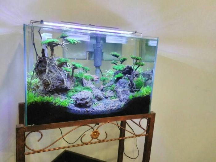 Jual Aquascape - Jakarta Selatan - Denny Aquarium | Tokopedia