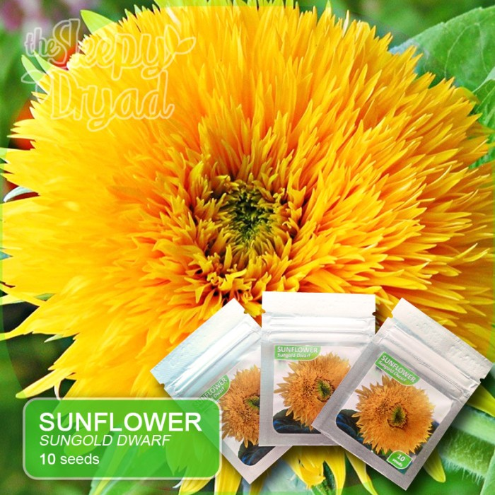 Jual 10 Seed Sunflower Sungold Dwarf Teddy Bear Benih Bunga Matahari Jakarta Pusat Sleepy Dryad Tokopedia