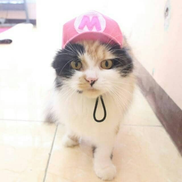 harga Topi kucing - topi anjing - aksesoris topi mario baju kucing anjing Tokopedia.com