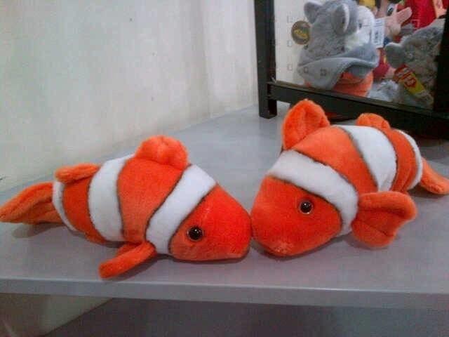 Info Ikan Nemo Travelbon.com