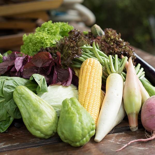 Jual Surprise Veggie Box Harga Promo Terbaru