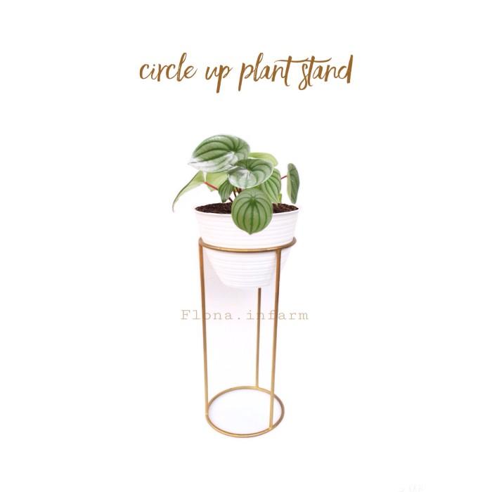 Circle Up Plant Stand, Rak Pot Murah Minimalis, Rak Tanaman,