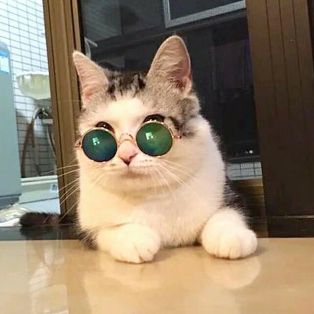Unduh 97+  Gambar Kucing Keren Pake Kacamata Terbaik HD