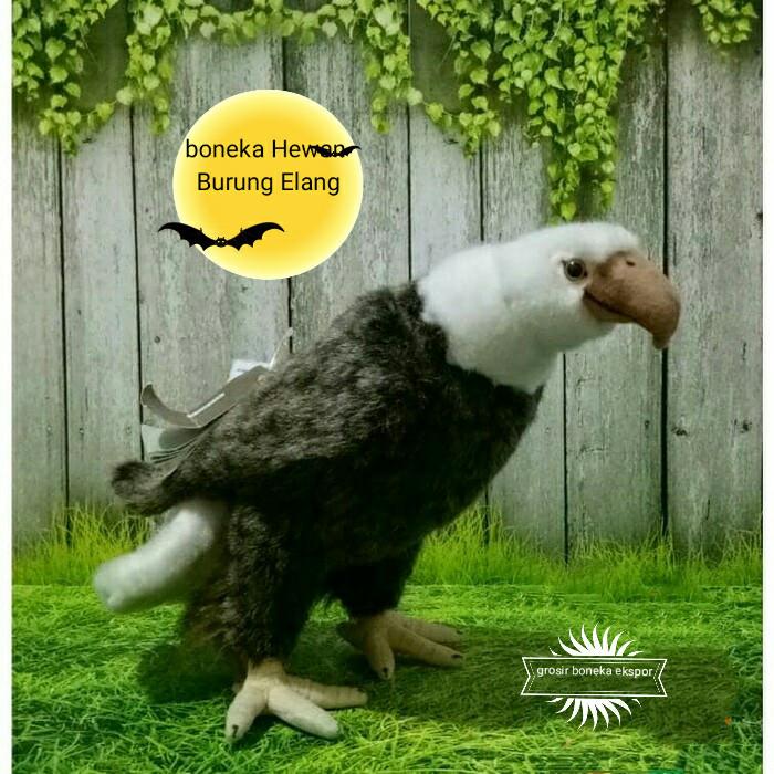 Download 107  Gambar Burung Elang Dari Kertas Karton HD