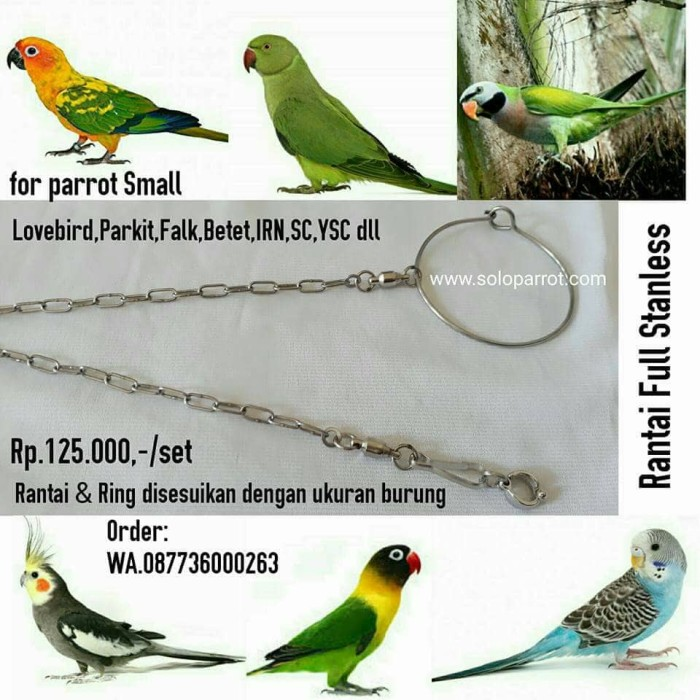 harga Rantai buat burung parkit lovebird falk cockatail betet sc ysc irn dll Tokopedia.com