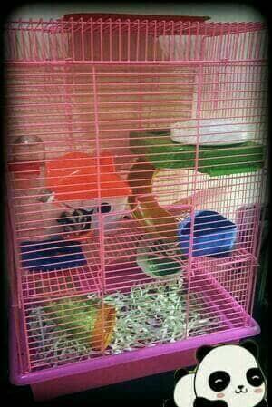 harga Kandang Hamster Kucing ( Kandang Tingkat 3 ) Tokopedia.com