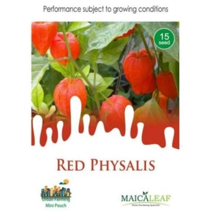 (Diskon) Maica Leaf - Benih Buah Ciplukan Red Physalis