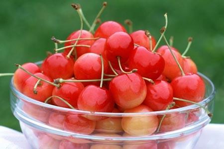 benih biji buah Beach Cherry Tahan Panas !