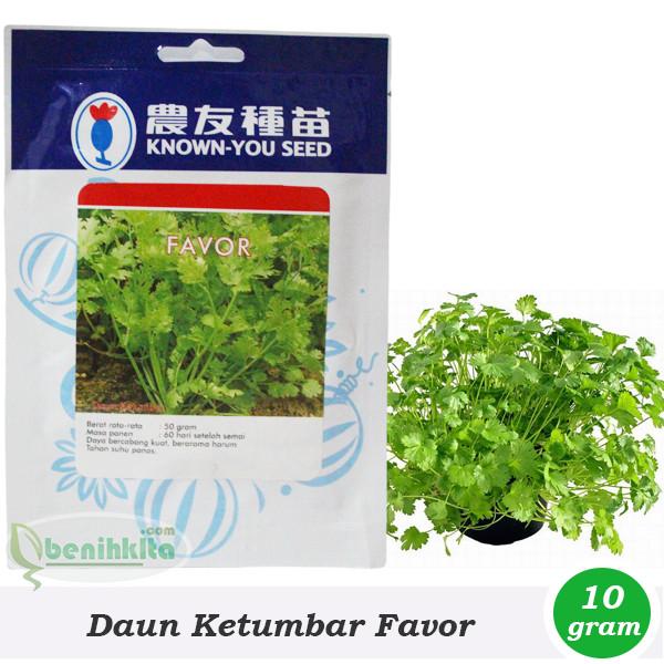 Benih/Bibit Daun Ketumbar Favor (Known-You Seed)