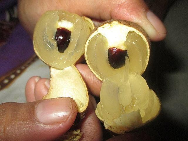 harga Bibit tanaman buah kelengkeng new kristal 60cm Tokopedia.com