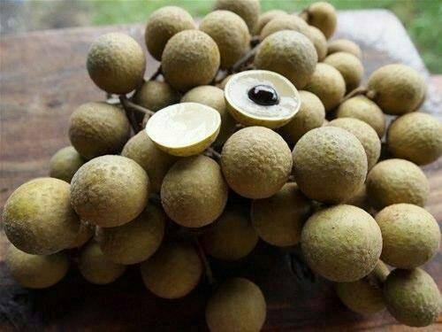 harga Bibit tanaman buah kelengkeng matalada biji kecil Tokopedia.com