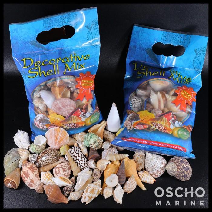 harga Shell pack (kerang laut) Tokopedia.com