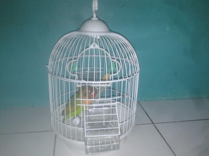 harga Kandang/Sangkar Besi Pendek Burung Kecil (Pleci Kenari Lovebird masuk) Tokopedia.com