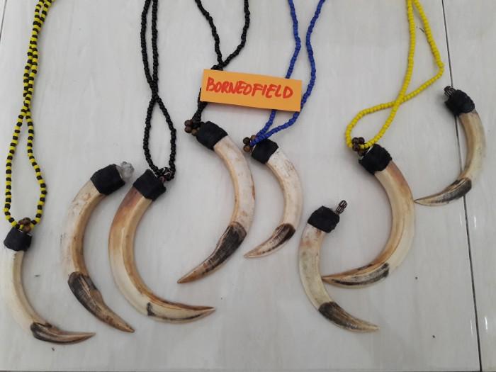 harga Taring babi hutan ikat hitam Tokopedia.com