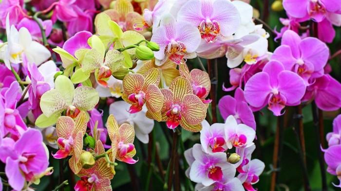 harga Repro Gambar Lukisan Foto Bunga Anggrek Orchid Custom Order Tokopedia.com