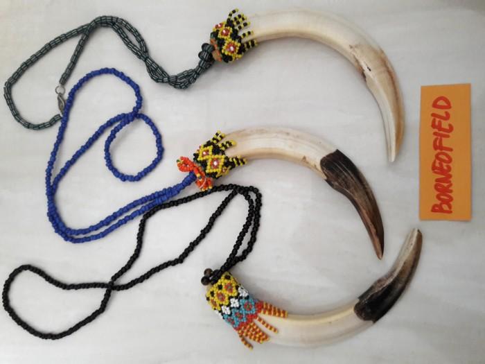 harga Kalung taring babi hutan asli Tokopedia.com