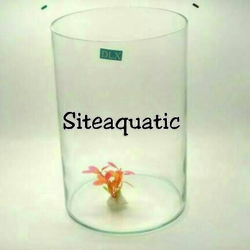 Katalog Aquarium Toples Hargano.com