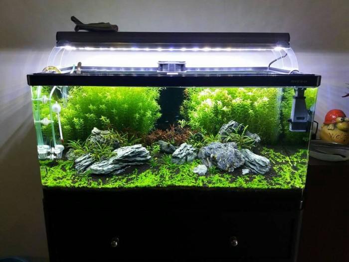 600 Foto Desain Aquascape Surabaya Gratis Terbaik Untuk Di Contoh