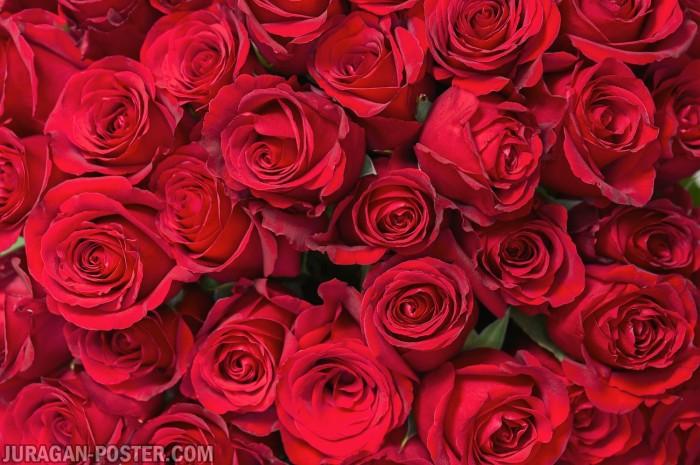 Jual Poster Murah Gambar Bunga Mawar Merah 206 Ukuran Besar 120x180cm Kab Majalengka Juragan Poster Murah Tokopedia
