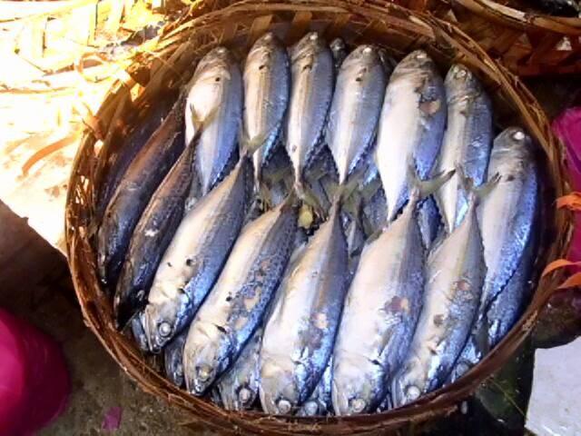 101+ Jenis Gambar Ikan Rebus Paling Bagus