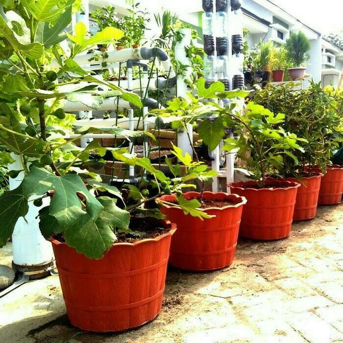 harga Khusus gojek pot bunga plastik motif kayu 45 cm Tokopedia.com