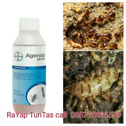 Jual Agenda 25 Ec Anti Rayap Termite Control Terbaik Di Kelasnya Jakarta Selatan Toko Biah Tokopedia
