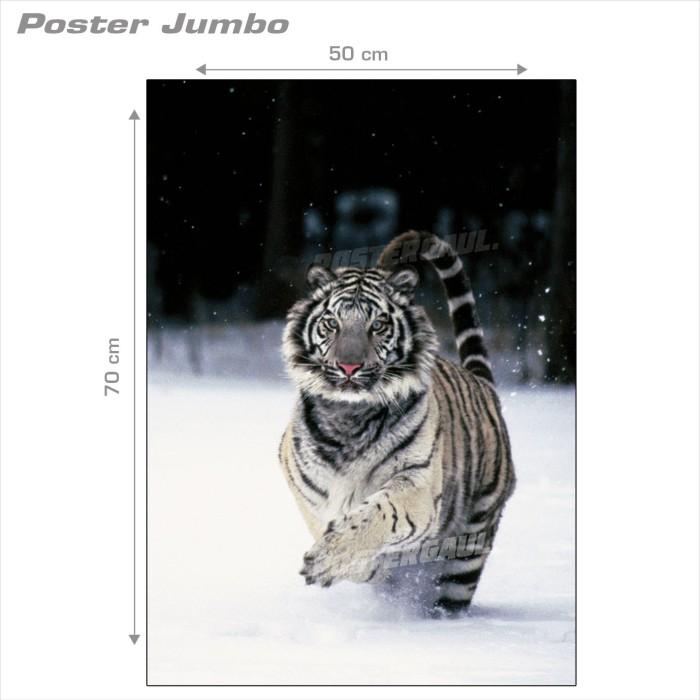 Poster Jumbo FAUNA: HARIMAU PUTIH #MSC5- 50 x 70 cm