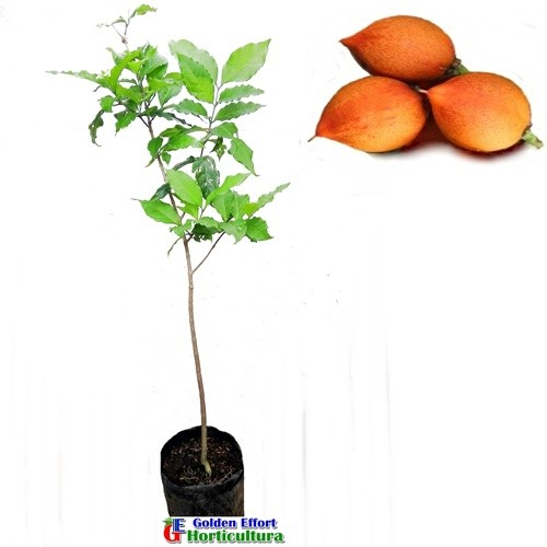 harga Kacang amazon Tokopedia.com